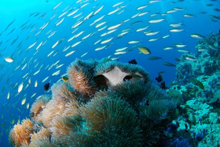 diving-689825_1920