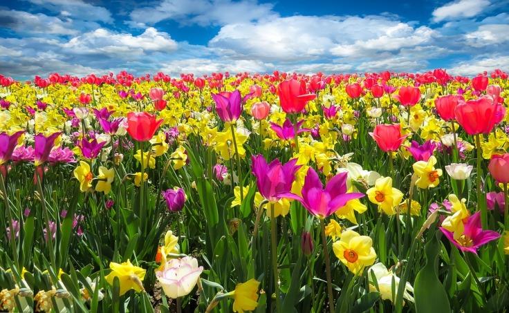 spring-awakening-1197602_960_720