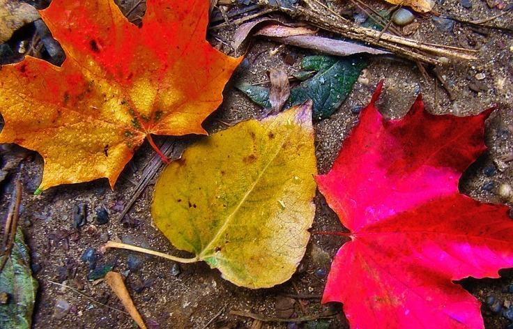 leaf-62710_960_720
