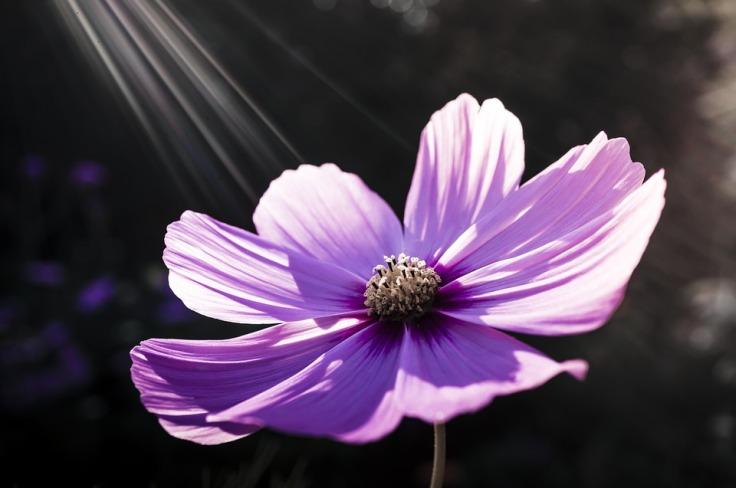 flower-213415_960_720