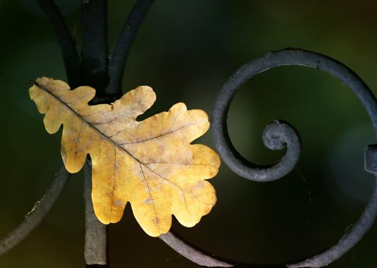 leaves-1708525_960_720