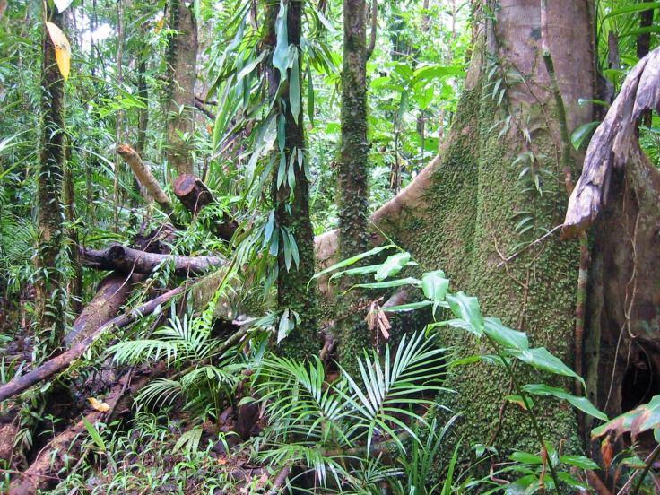 rain_forest_daintree_australia
