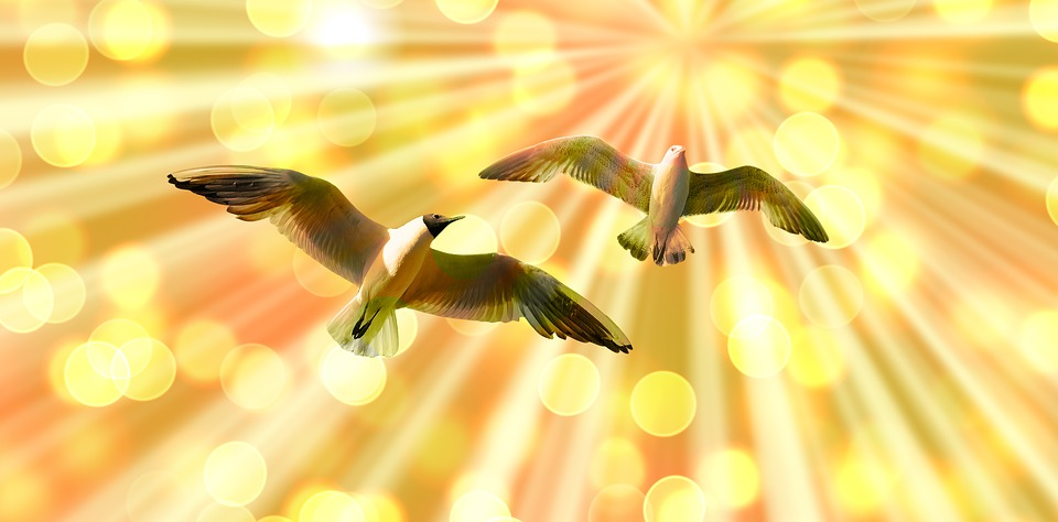 gulls-2633864_960_720