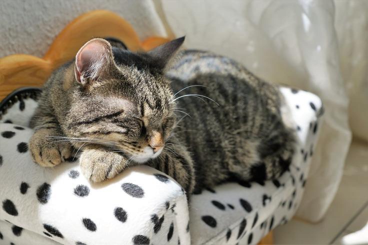 cat-2439124_960_720