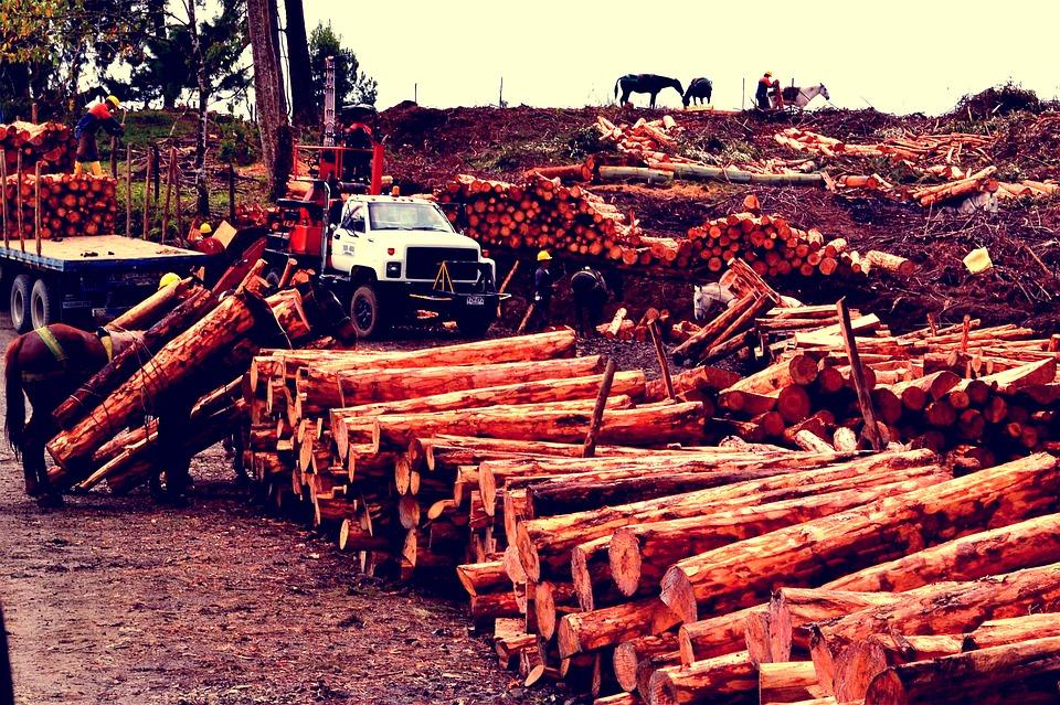 trees-1460363_960_720