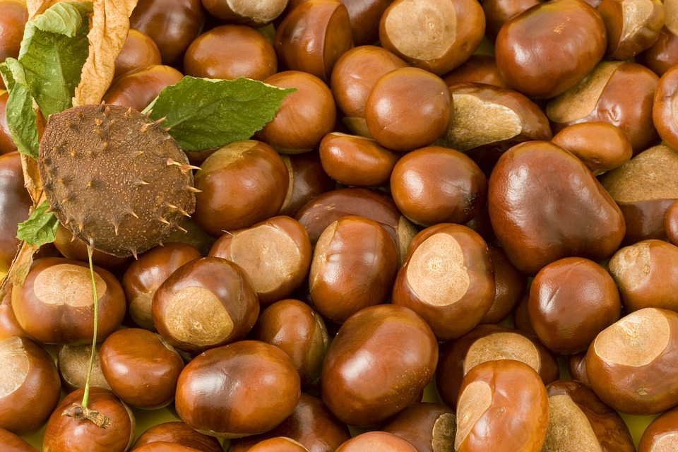 conkers-15186_960_720